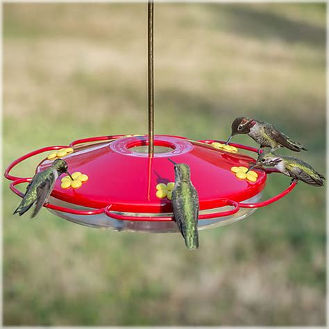 what do i put in my hummingbird feeder the birds and the bees battling bees at hummingbird feeders