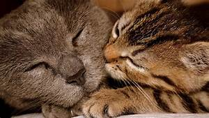 Cats Kissing Each Other  16