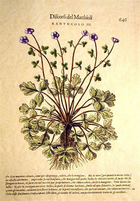 fiori botanica fiori e botanica florence prints le ste di firenze