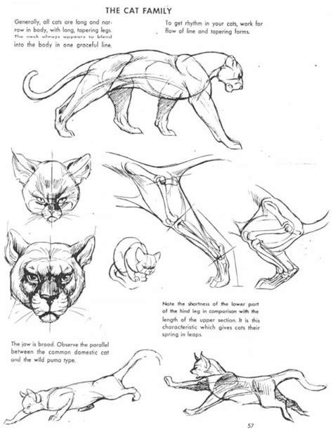 art  animal drawing  ken hultgren drawing