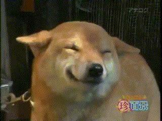 happydog reaction gifs