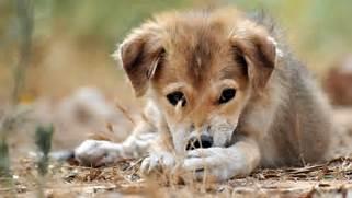 Sad Puppy   1920 x 108...Sad Puppy