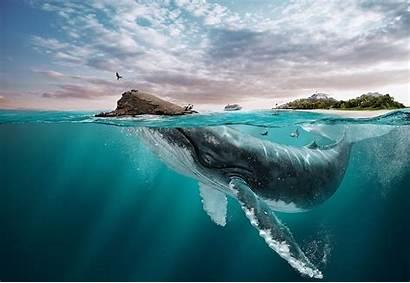 Whale Underwater Water Beach Nature Landscape Digital