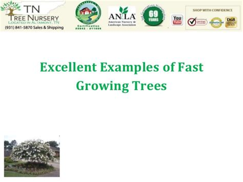 Excellent Examples Of Fast Growing Trees