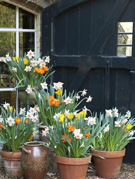 25 best ideas about planting bulbs on