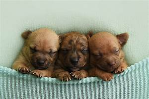 Newborn Puppy Photoshoot for Foster Dogs PEOPLE com