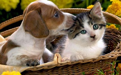 baixar de voz de gatos e cachorros