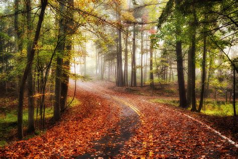 autumn, Road, Forest, Trees, Fog, Landscape Wallpapers HD ...