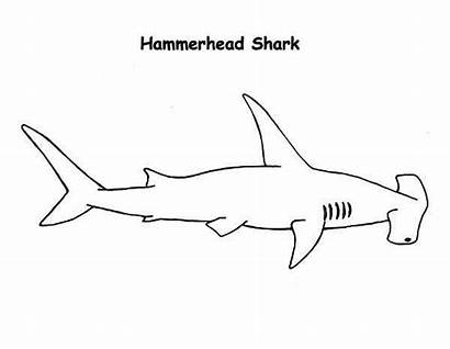 Shark Hammerhead Coloring Drawing Realistic Drawings Sharks