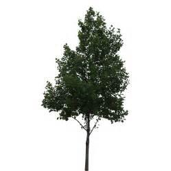 Photoshop Tree Cutout