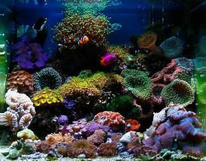 Salt water aquarium | Reef Tank | Pinterest