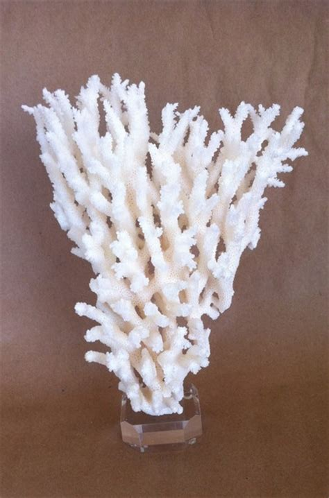 coral colored decorative accents decorative white coral on acrylic base home decor los