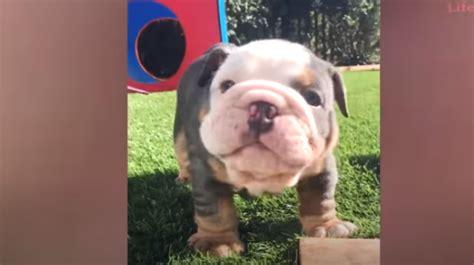 Super Funny Dogs Video Compilation Dogflix Super Funny