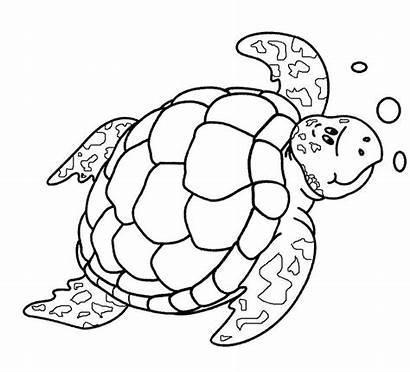 Turtle Coloring Sea Pages Printable Drawing Turtles