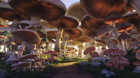 mushroom forest andrei serghiuta freelance  artistandrei serghiuta freelance  artist
