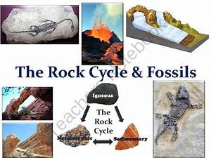 The Rock Cycle And Fossils Lesson