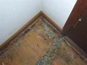 how to clean mold on carpet - Carpet The Honoroak
