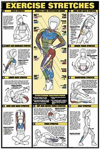 Exercises For All Muscle Groups In Pictures Shram Kiev Ua