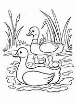 Zwanen Swans Swan Kleurplaat Leukekleurplaten Zwaan Kleurplaten Colouring Coloringpage Coloring Kleur Colour Check sketch template