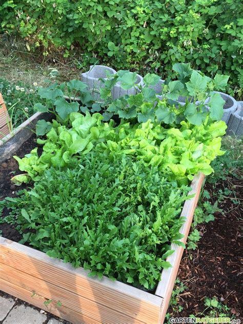 Bepflanzen Eines Hochbeetes hochbeet f 252 llen pflegen und bepflanzen gartengestaltung