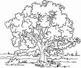 Coloring Tree Adults Baum Ausmalbilder Arbre Kapok Zum Colouring Nature Ausmalen Malvorlagen Mustard Coloriage Kostenlos Template Konabeun Printable Popular Coloringdoo sketch template
