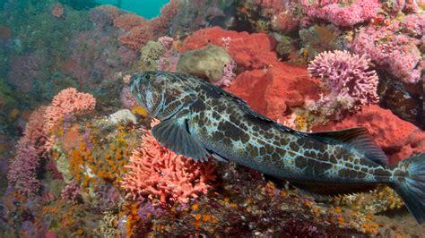 lets protect critical ocean habitat