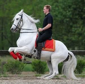 12 best images about HORSE DRESSAGE