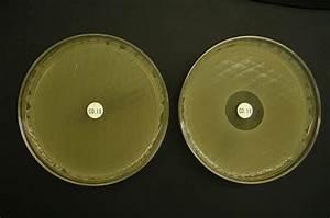 Colistin  An Antibiotic Of Last Resort