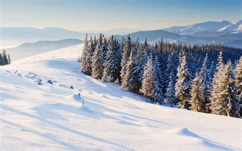 Nature Winter Snow Christmas Tree Tree Mountain Winter
