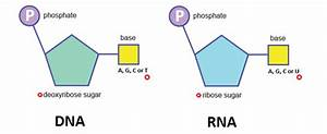 What Are The Three Components Of A Single Nucleotide