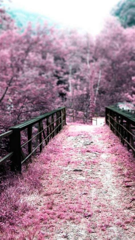Pink cherry blossom ultrahd wallpaper for wide 16:10 5:3 widescreen whxga wqxga wuxga wxga wga ; Download Cherry Blossom Phone Wallpaper Gallery