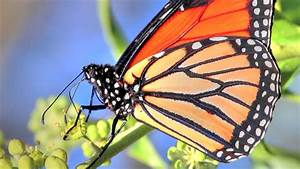5 Unusual Facts About Butterflies