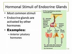 The Endocrine System And Hormone Function