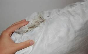 Daunenkissen Waschen Ohne Trockner : kissen waschen f r einen frischeren und angenehmen schlaf ~ A.2002-acura-tl-radio.info Haus und Dekorationen