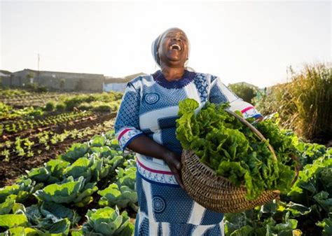 transforming agricultural sector moneyweb