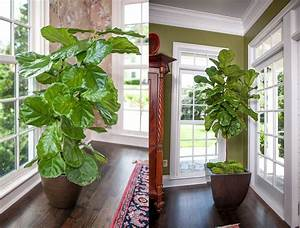 20, Most, Beautiful, Houseplants, You, Need, To, Know, About