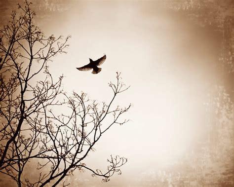 Beige Bird Flying Photography Dark Black