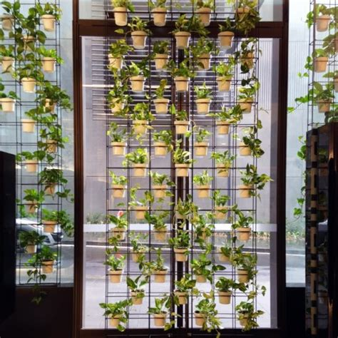 natural green walls modern office plants