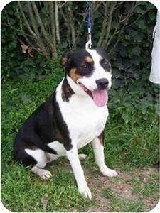 Duchess | Adopted Dog | URGENT | Marion, AR | Australian ...