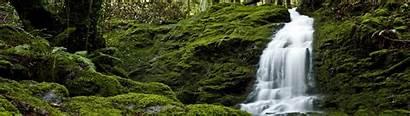 Dual Nature Screen Forest Landscape Monitor Desktop