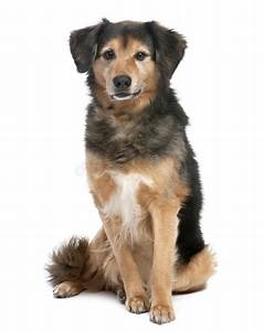 Brown And Black Mixed-Breed Dog Stock Photography - Image ...