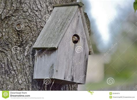 sparrow  bird house stock photo image  waiting nest