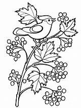 Coloring Pages Rowan Berries Printable sketch template