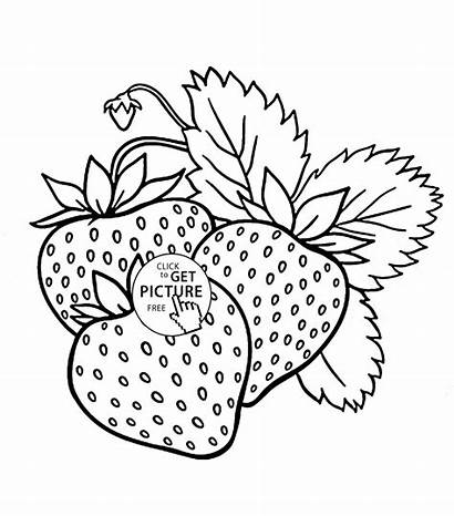 Coloring Fruit Fruits Printable Strawberries Strawberry Drawing