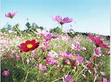 Beautiful Field Flowers Wallpaper Wallpapers9