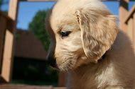 PetSmart Puppy Adoption Small Dog