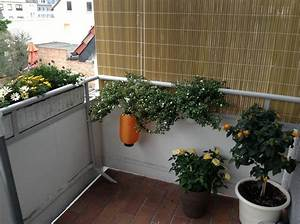 Seitlicher Sichtschutz Balkon : seitlicher sichtschutz am balkon diy forum ~ Orissabook.com Haus und Dekorationen