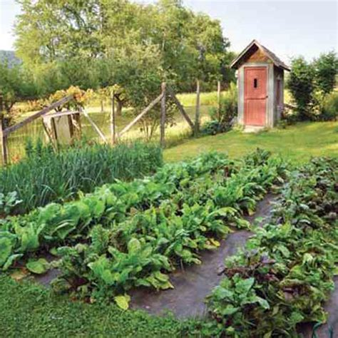 How To Start An Organic Vegetable Garden In Your Backyard by Top Organic Vegetable Gardening Challenges And How To