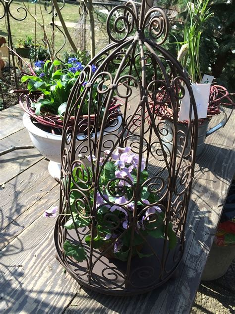 Pflanzen Im März by Aktuelle Fotos Vom Garten Im M 228 Rz Pflanzen