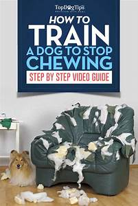how to train a dog to stop chewing a video guide top With how to stop going to the bathroom so much